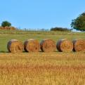Solicitar pago único agricultura