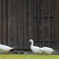 Proyecto de granja avícola
