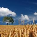 Solicitar ayudas jóvenes agricultores