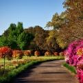 Valoración de arboles ornamentales