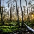 Valoración forestal
