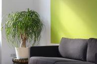 Comprar un piso de un banco: ¿es buena idea?