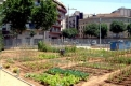 Ocio sostenible, economía verde y relaciones sociales a través de los Huertos Urbanos Compartidos