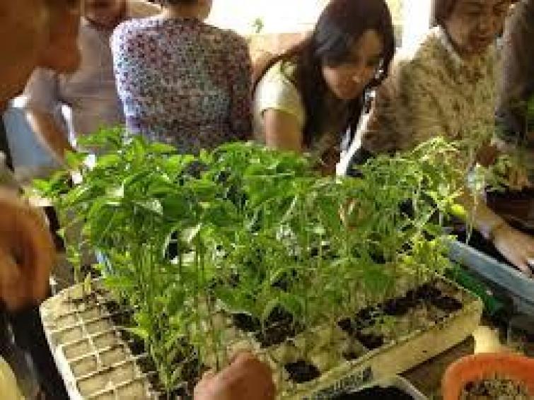 brotes y semillas huerto urbano
