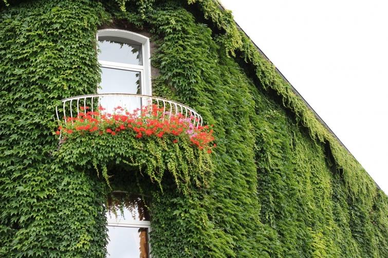 fachada vegetal eficiente