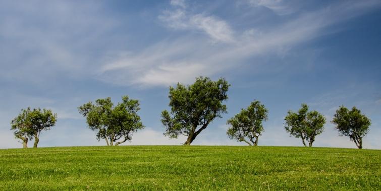 Por qué se realiza un estudio de impacto ambiental